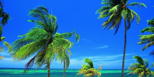 Cuba: Two Week 4 Star All Inclusive Holiday Close to the Beach